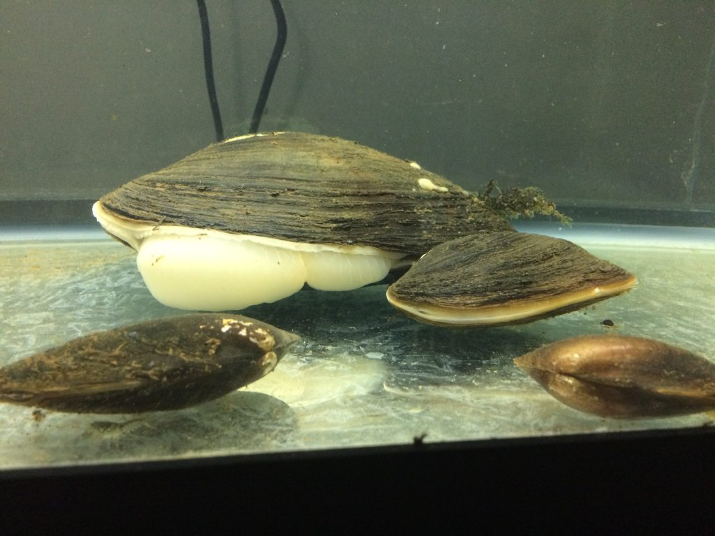 Several common mussel species doing what they do.